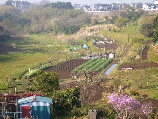 春の藤棚の谷51