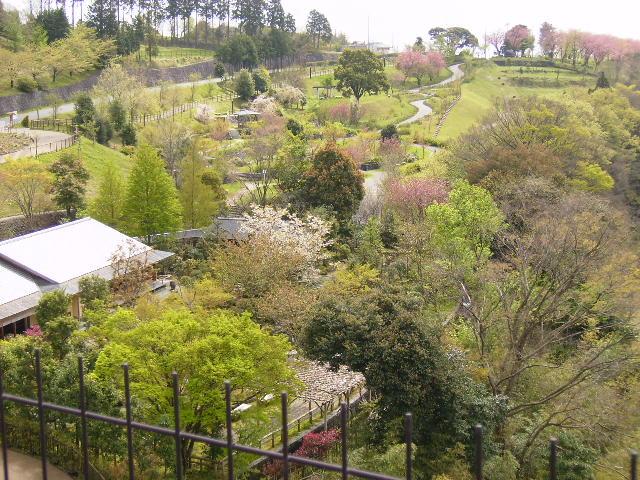 日本庭園を望む124