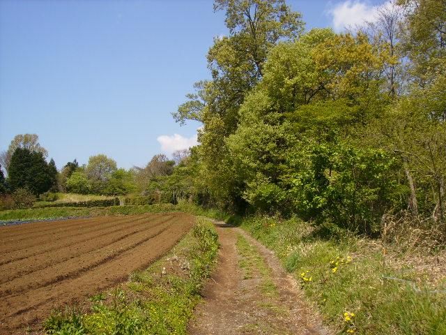 若草の農道91