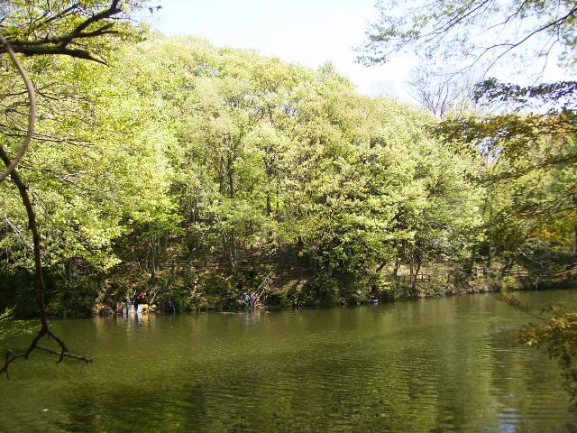 湖畔の若葉125