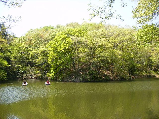 湖畔の若葉167