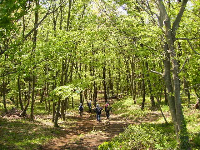 若葉の林108