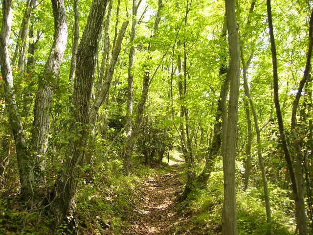 新緑の林97