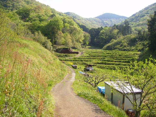 若草の農道40