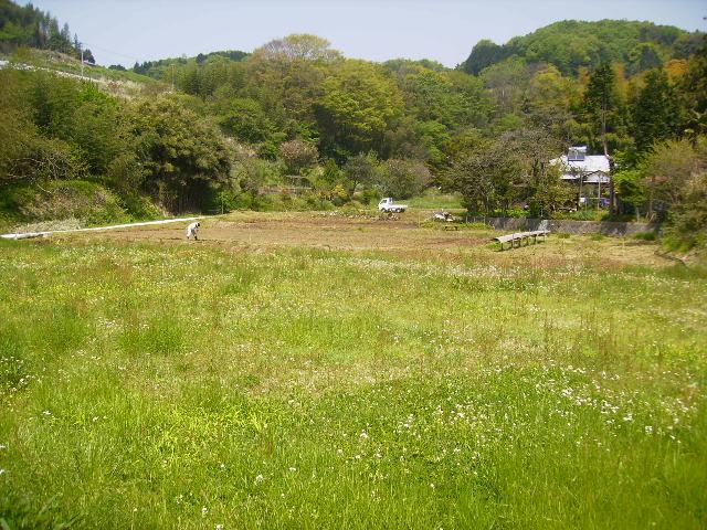 若草の田んぼ75