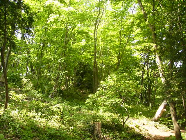 新緑の学習林39