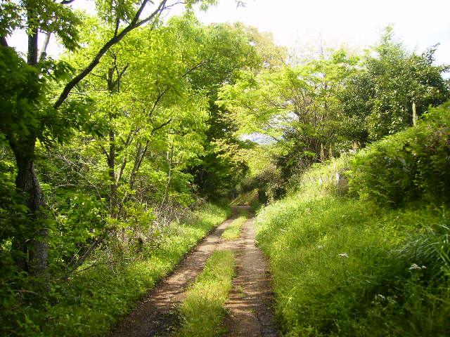 新緑の山道06