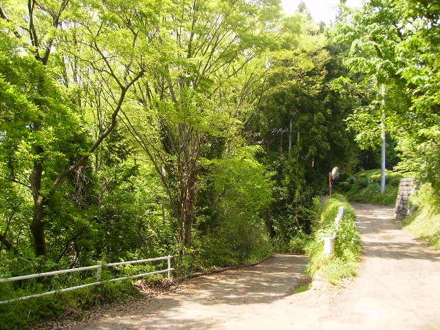 新緑の山道15