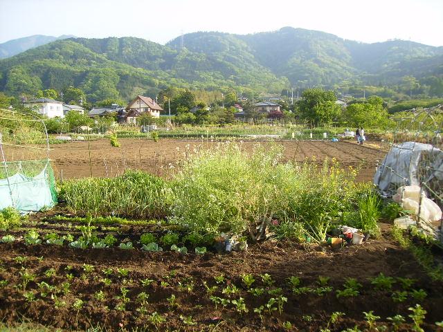 晩春の畑10
