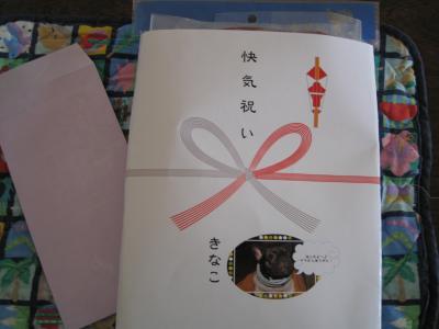 kaikiiwai-1.jpg