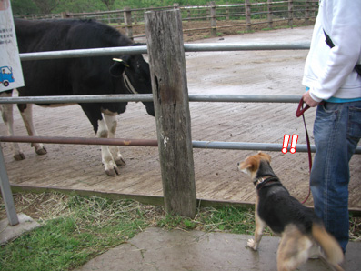 牛とのであい