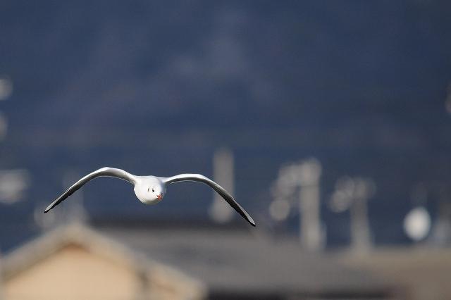 ゆっくり飛ぶ鳥さんです