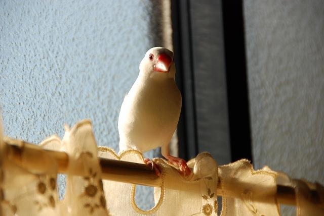 窓際のハク