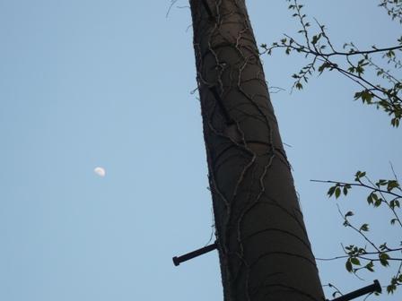 P1010146電信柱と月