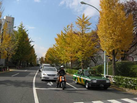 IMG_3500紅葉 町2