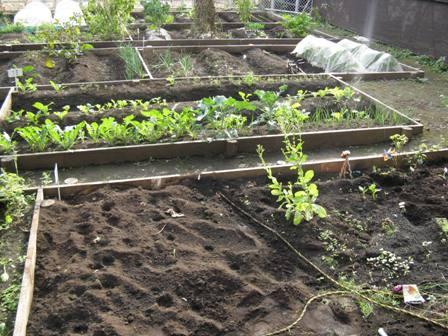 IMG_3460菜園