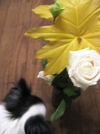 生け花とミウ