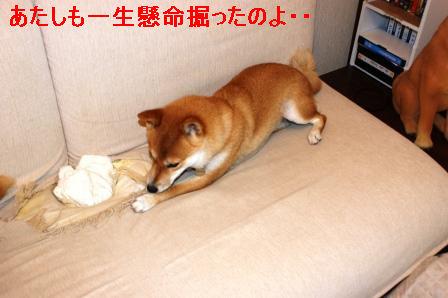 1_20091004145423.jpg