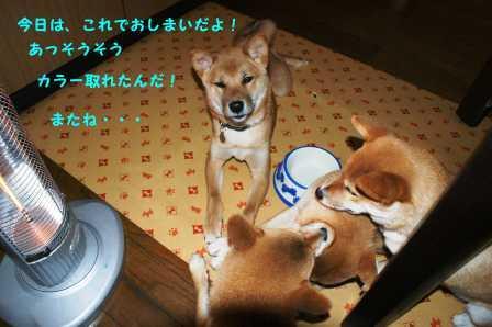 2008_11200272.jpg