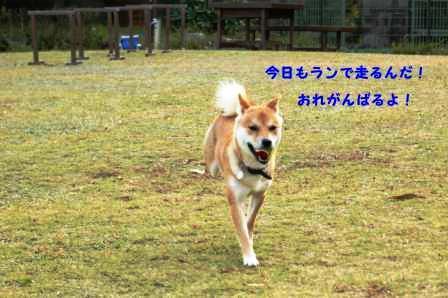 2008_11220329.jpg