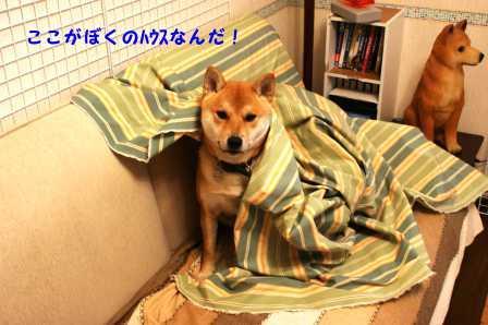 2008_11290008.jpg