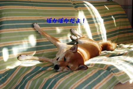 2008_11300027.jpg