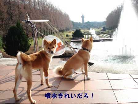 2008_12280054.jpg