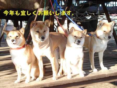 2009_01010097.jpg