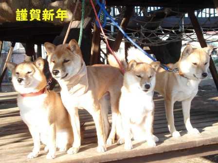 2009_01010098.jpg
