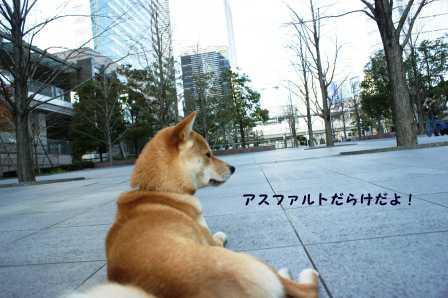 2009_01110276.jpg