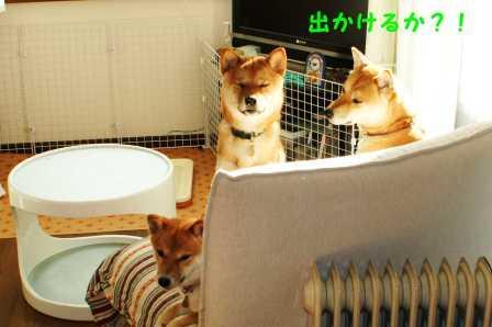 2009_01180025.jpg