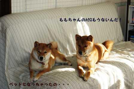 2009_01250111.jpg