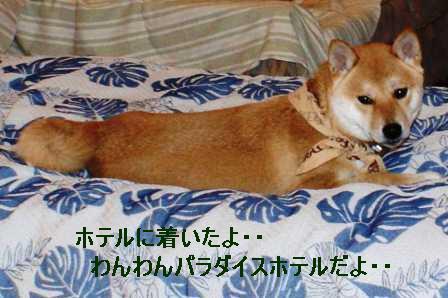 2009_02080190.jpg
