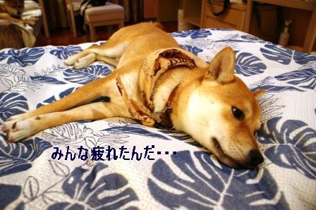 2009_02080200.jpg