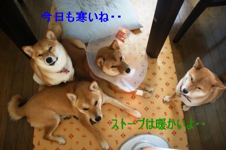 2009_02220004.jpeg