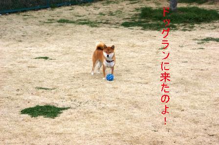 2009_03070064.jpeg