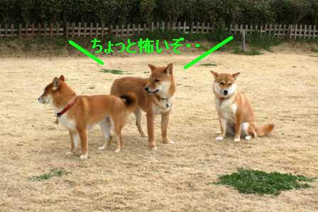 2009_03070134.jpeg