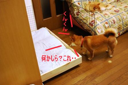 2009_03150191.jpeg