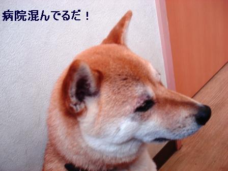 2009_06060152.jpeg