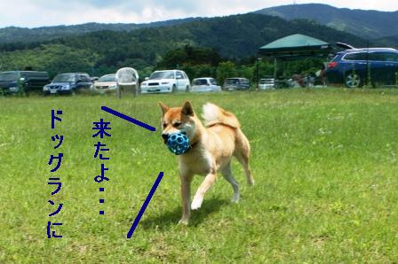 2009_06070024.jpeg
