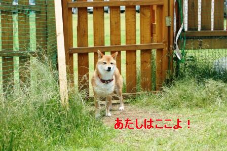 2009_06070038.jpeg