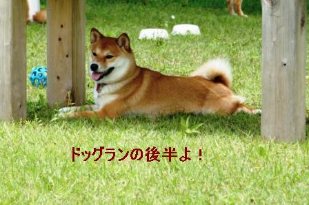 2009_06070064.jpeg