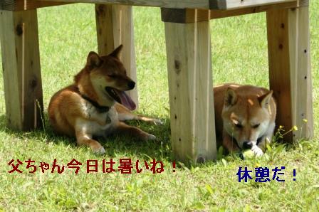 2009_06070072.jpeg