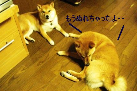 2009_06270045.jpg