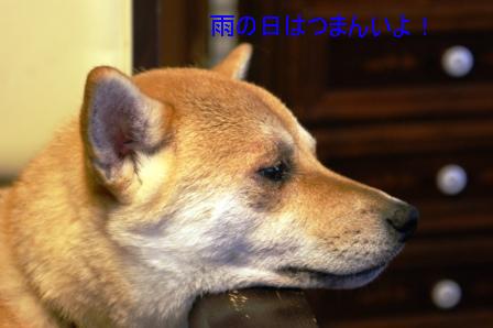 2009_07030017.jpg