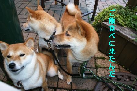 2009_07040038.jpg