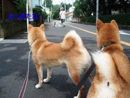 2009_07070050.jpg