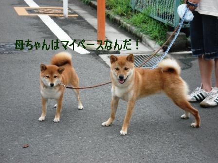2009_07070053.jpg