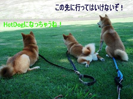 2009_07260068.jpg