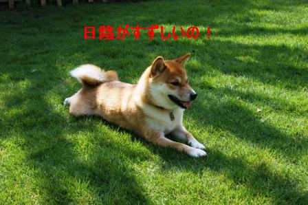 2009_08150136.jpg